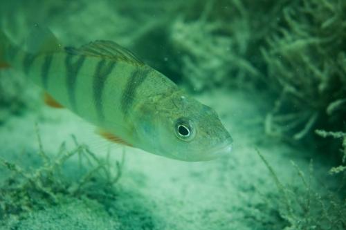 unterwasserwelten044