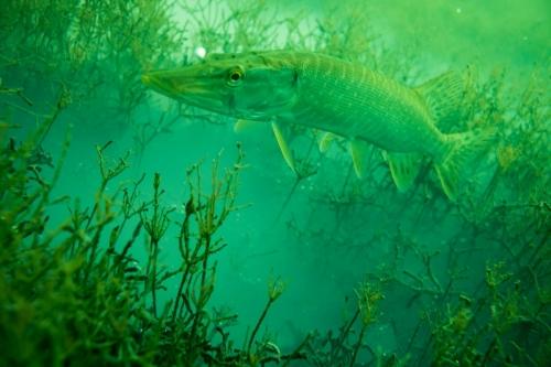unterwasserwelten047