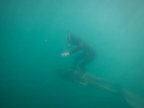 unterwasserwelten051
